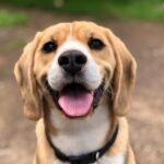 5 COMMON DOG CAR SICKNESS SYMPTOMS